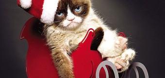 Grumpy Cat – Chú Mèo quạu quọ