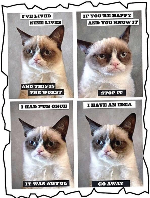 grumpy-cat-3