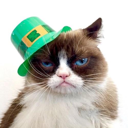 grumpy-cat-4