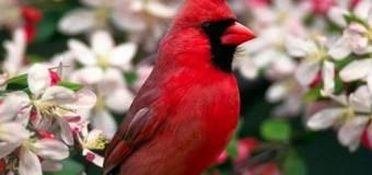 Chim kiểng đẹp nhất trên thế giới