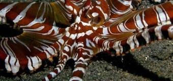 Khám phá động vật thân mềm dưới biển