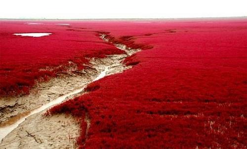 Biển đỏ-Trung Quốc