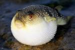 Những loại động vật độc nhất thế giới