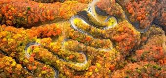 Top 5 con đường đẹp nhất thế giới