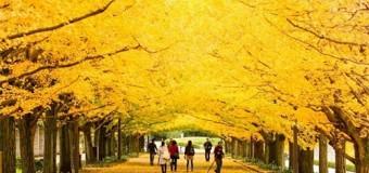 Mùa du lịch Hàn Quốc đẹp nhất trong năm