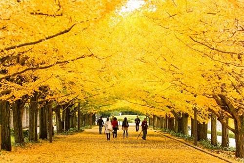 Mùa thu ở Hàn Quốc
