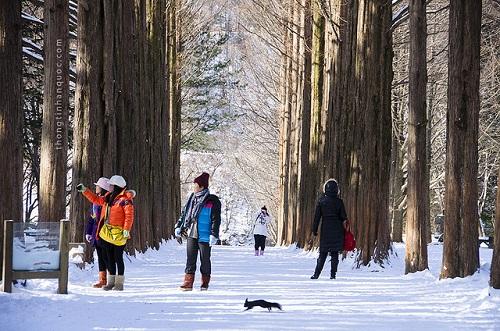 Du lịch mùa đông Hàn Quốc