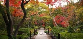 Mùa thu rực rỡ tại đất nước Nhật Bản