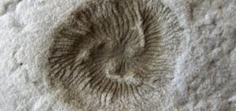 Khám phá quá trình tiến hóa kỳ lạ của sự sống trên Trái đất qua hóa thạch cổ
