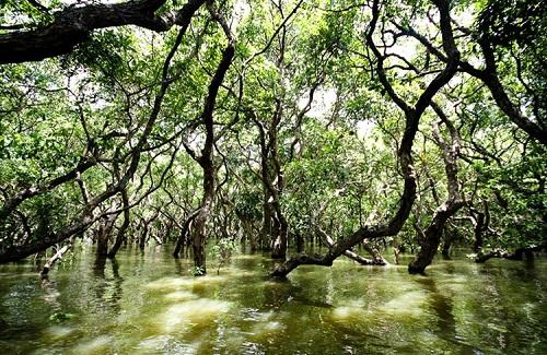 Rừng ngập nước mùa mưa ở Thái Lan