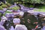 Tư vấn cách bố trí ao hồ trong khu vườn nhà