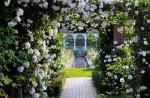 Những điều bạn cần tránh khi thiết kế vườn