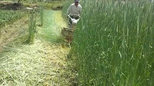 Lựa chọn máy cắt cỏ phù hợp