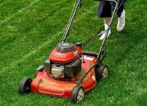 Máy cắt cỏ mini