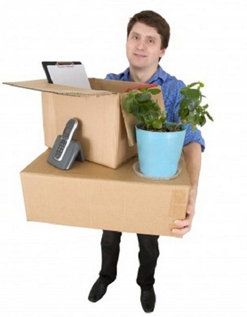 Bí quyết chuyển cây cảnh đơn giản khi chuyển nhà