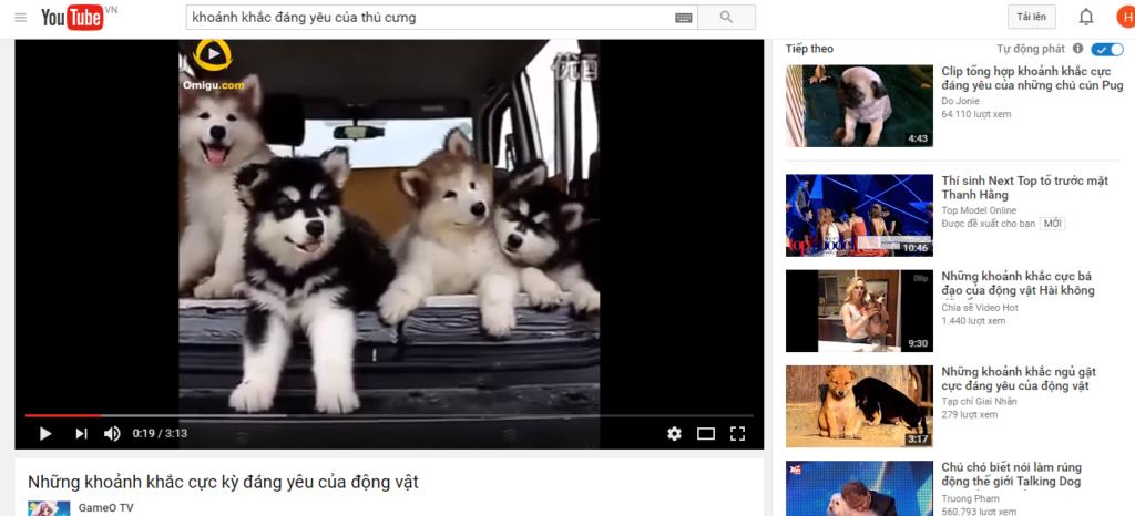 Video tổng hợp thú cưng đáng yêu