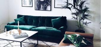 Cây trang trí trong nhà – Xu hướng thiên nhiên từ chính ngôi nhà của bạn