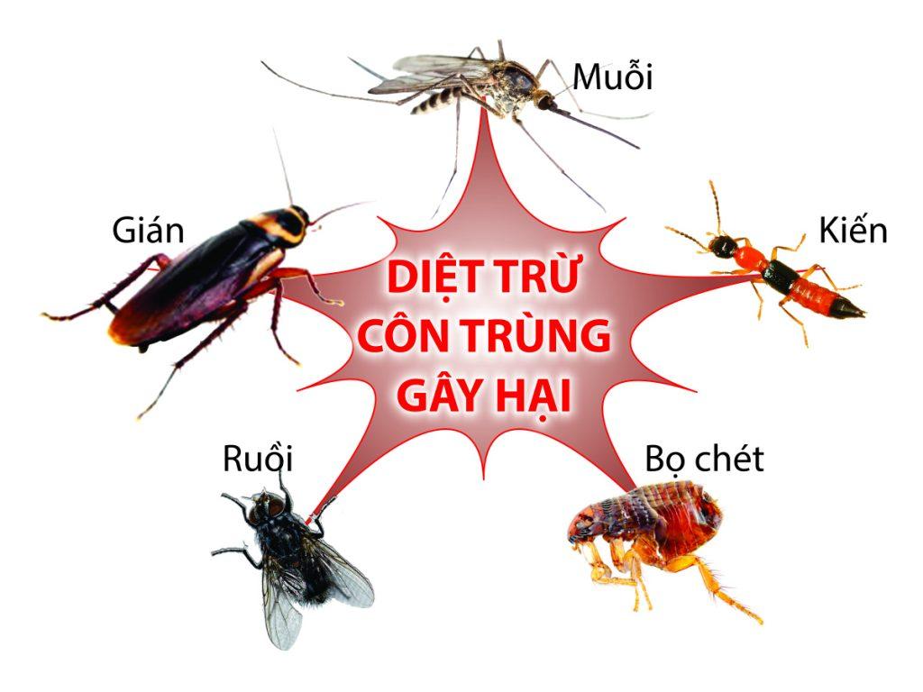 Diêt côn trùng tại nhà bằng cách nào