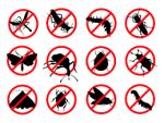 Tổng hợp các cách diệt côn trùng tại nhà