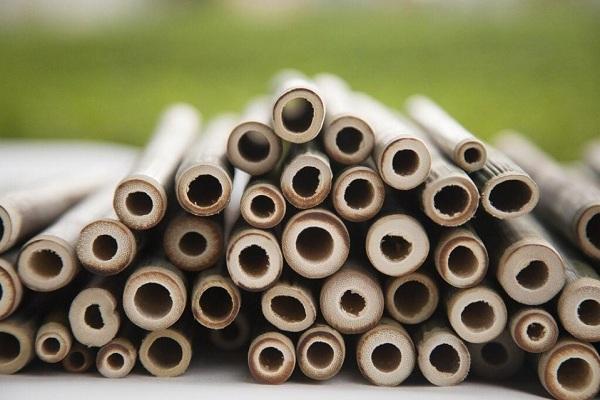 Ống hút tre giải pháp thay thế ống hút nhựa