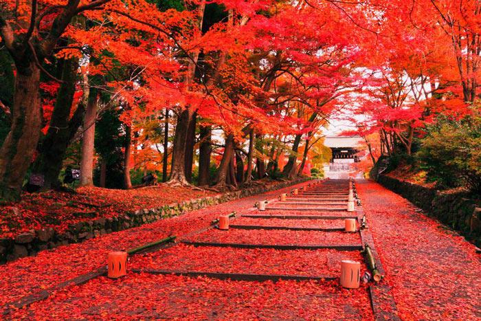 Du lịch Nhật Bản tháng 10 và tháng 11