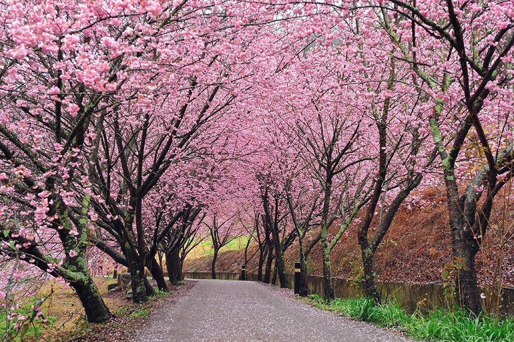 Du lịch Nhật Bản tháng 3 và tháng 4