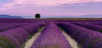 Bật Mí Kinh Nghiệm Hữu Ích Khi Du Lịch Provence