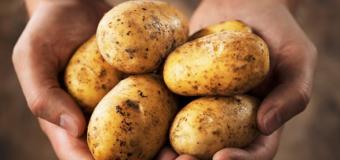 Phát hiện thú vị về khoai tây cho bạn