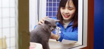 Khám phá khách sạn dành riêng cho chó mèo tại Hà Nội