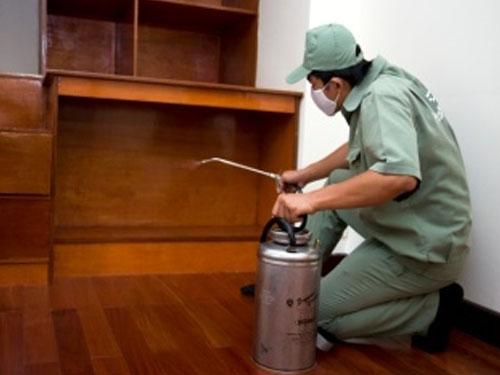 Chuyên viên đang phun thuốc diệt mối tại nhà