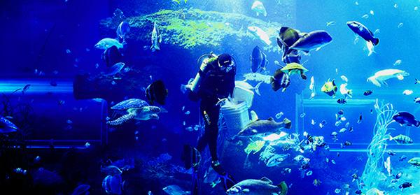 Viện Hải Dương Nha Trang