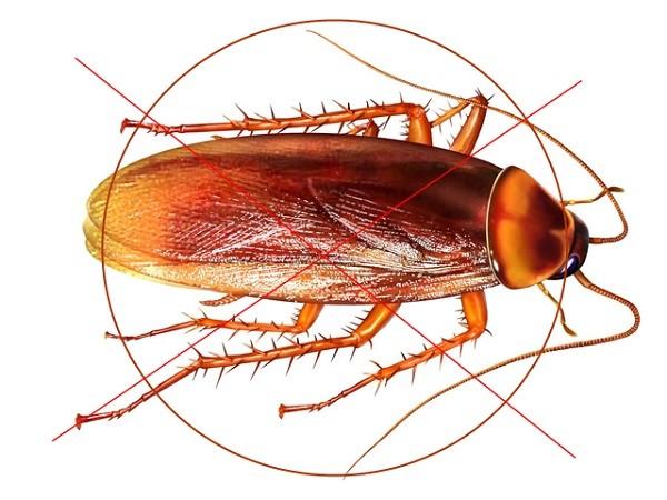 Một số phương pháp trong dịch vụ diệt côn trùng mà bạn cần biết