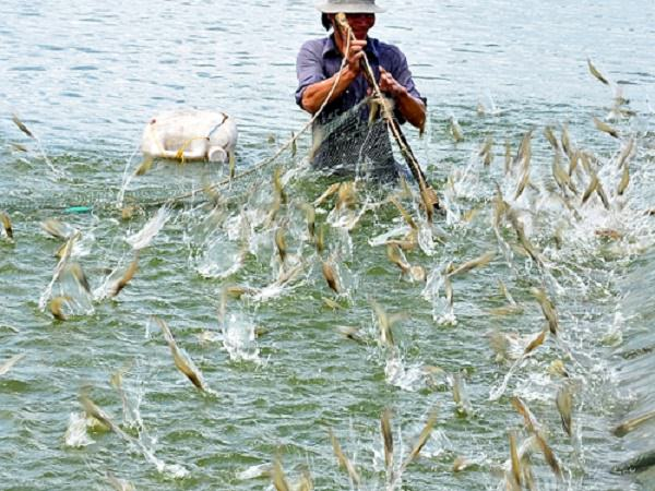Tìm hiểu độ mặn trong ngành nuôi trồng thủy sản hiện nay