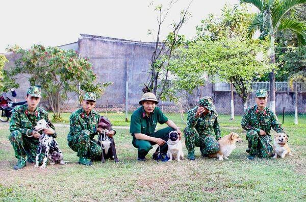 Trung tâm huấn luyện chó Sài Gòn DTC - tiết kiệm, hiệu quả và tận tình