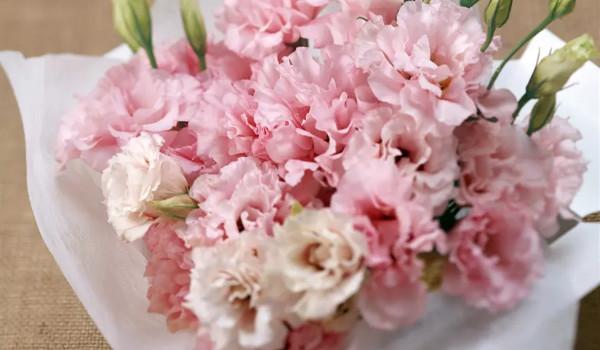 Hoa tặng người yêu ngày sinh nhật - Hoa cẩm chướng hồng