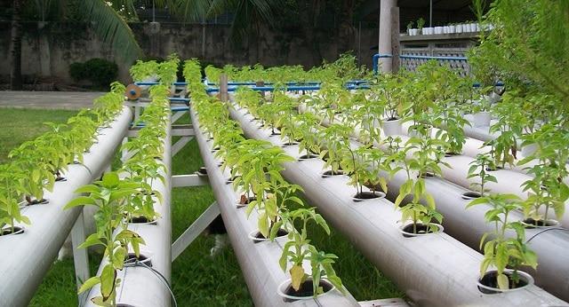 Giá thể trồng rau thủy canh có những công dụng gì?