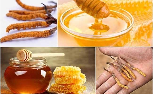 Cách dùng Đông Trùng Hạ Thảo ngâm mật ong hiệu quả nhất